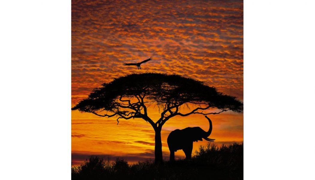 Fototapet African Sunset