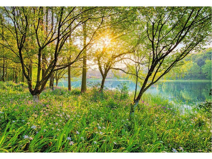 Fototapet Spring Lake