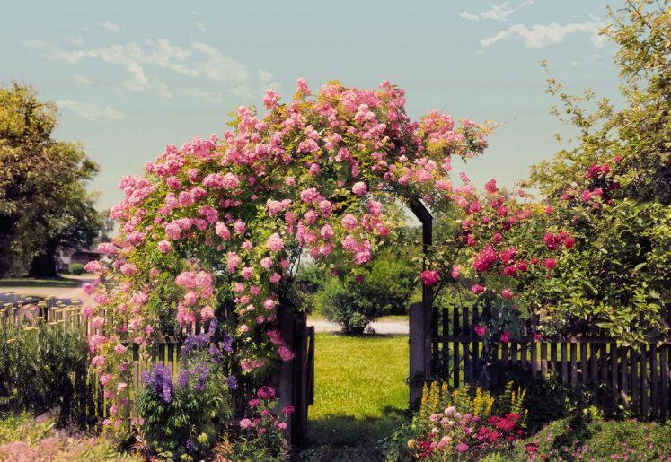 Fototapet Rose Garden