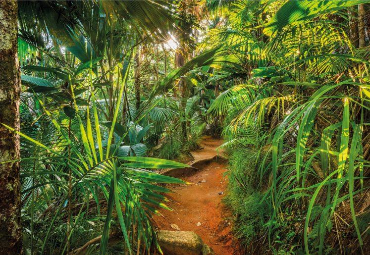 Fototapet Jungle Trail
