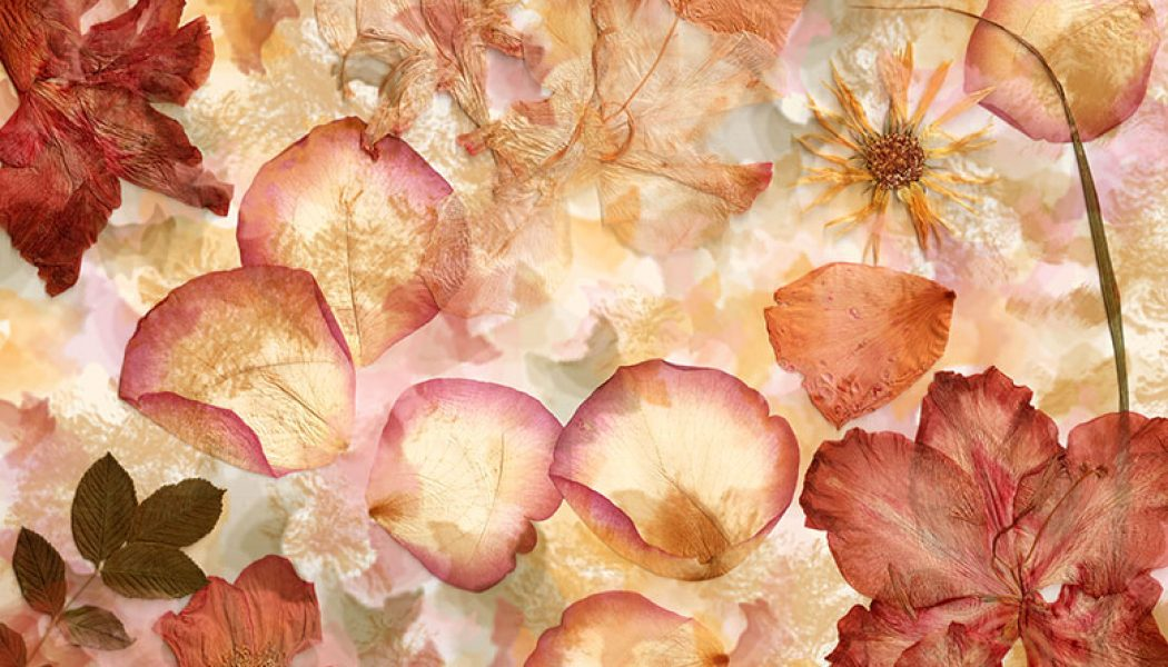 Fototapet Dried Flowers